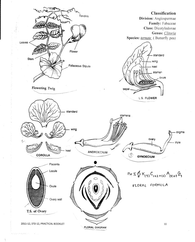 TAXONOMY BIOLOGY4ISC – Flower Dissection Worksheet
