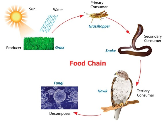 by products of chemosynthesis Chemosynthesis vs photosynthesis ecosystems depend upon the ability of some organisms to convert inorganic compounds into food that other organisms can then exploit.