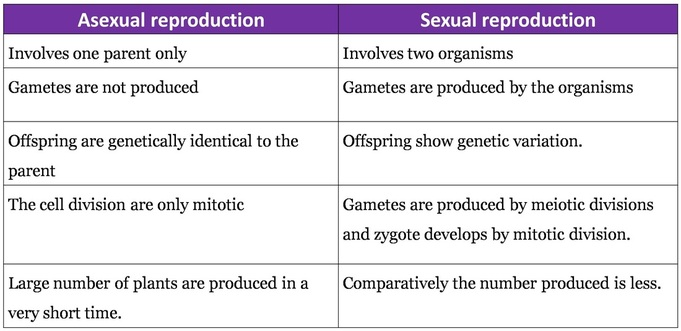 Main features of asexual reproduction
