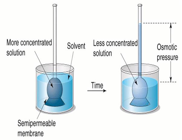 an experiment to understand the process of osmosis and diffusion Potato disc osmosis experiment help via a number of processes including diffusion materials must completely understand the process of osmosis.