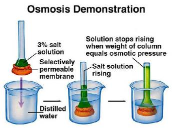 an experiment to demonstrate the process of diffusion To fully comprehend the results of the egg experiment, it's helpful to understand the difference between diffusion and osmosis during the process of diffusion.