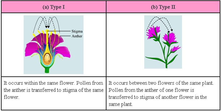 Sexual reproduction in plants pollination project